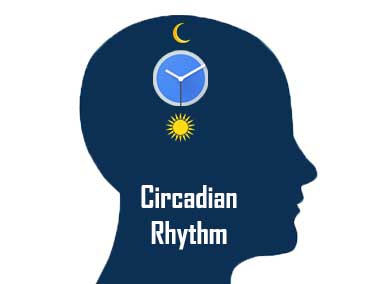 Understanding Circadian Rhythm and How Tuning LEDs Can Increase Health & Wellness