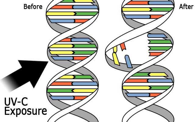 UVC deactivates COVID RNA/DNA